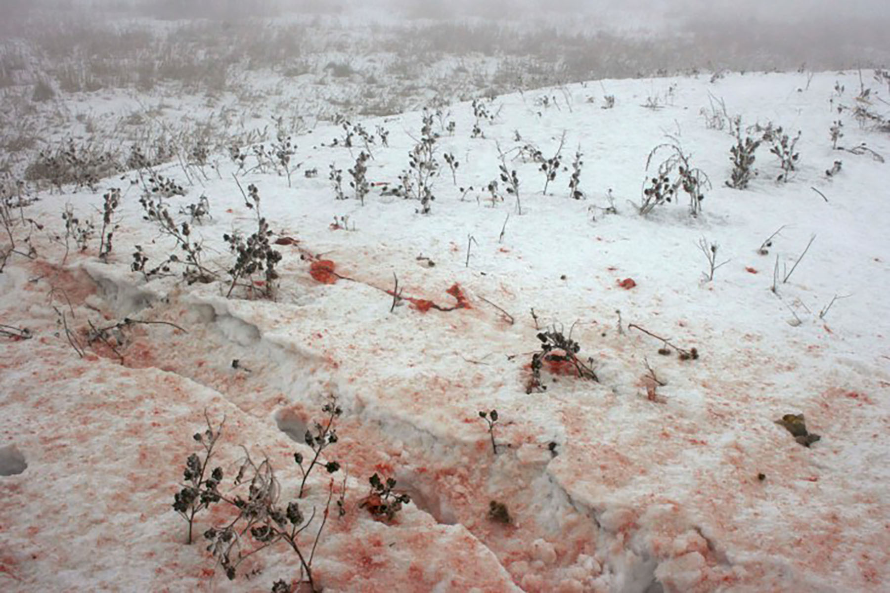 Blood stains are seen on snow at the site of a plane crash outside Almaty